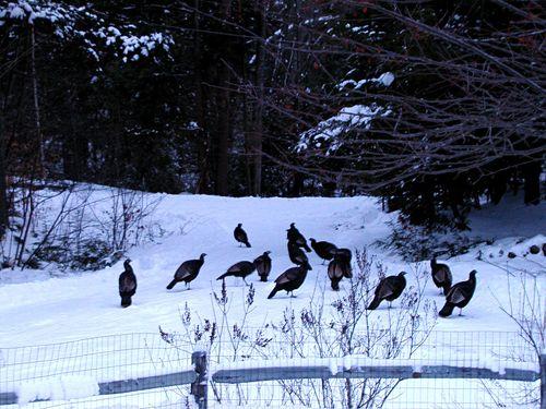 Whole Lotta Turkeys
